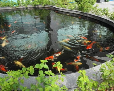best pond pump reviews for your garden